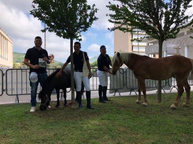 Pony Day 2018 Napoli