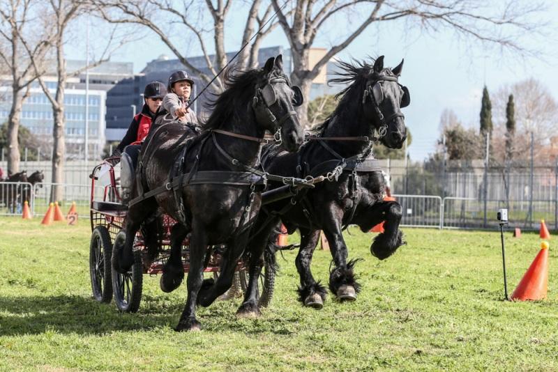 Attacchi Cavalli a Roma