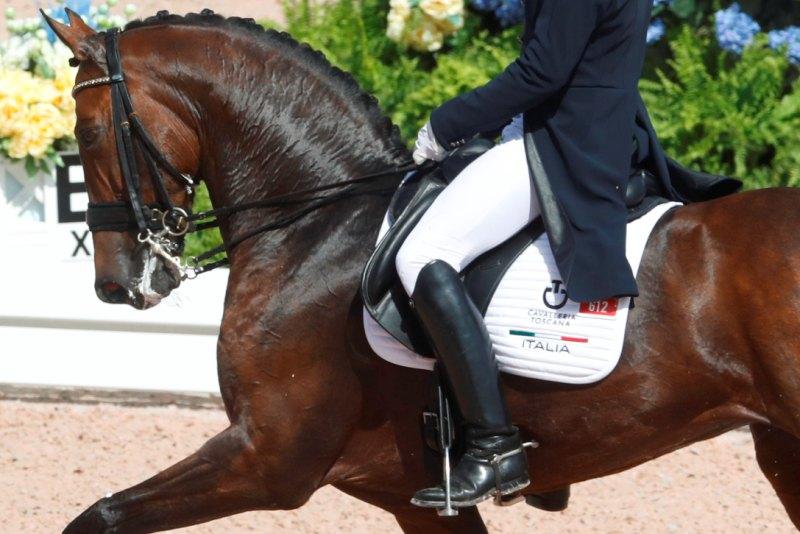 Fise Calendario.Federazione Italiana Sport Equestri Questo Il Calendario