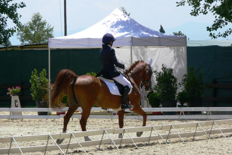 Generica Dressage Pony