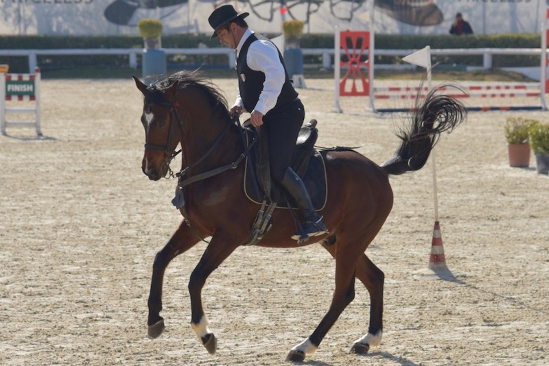 Working equitation 2