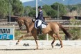 DRESSAGE: Europei. Italia Junior quinta a Vidauban