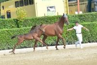 foal Etrea
