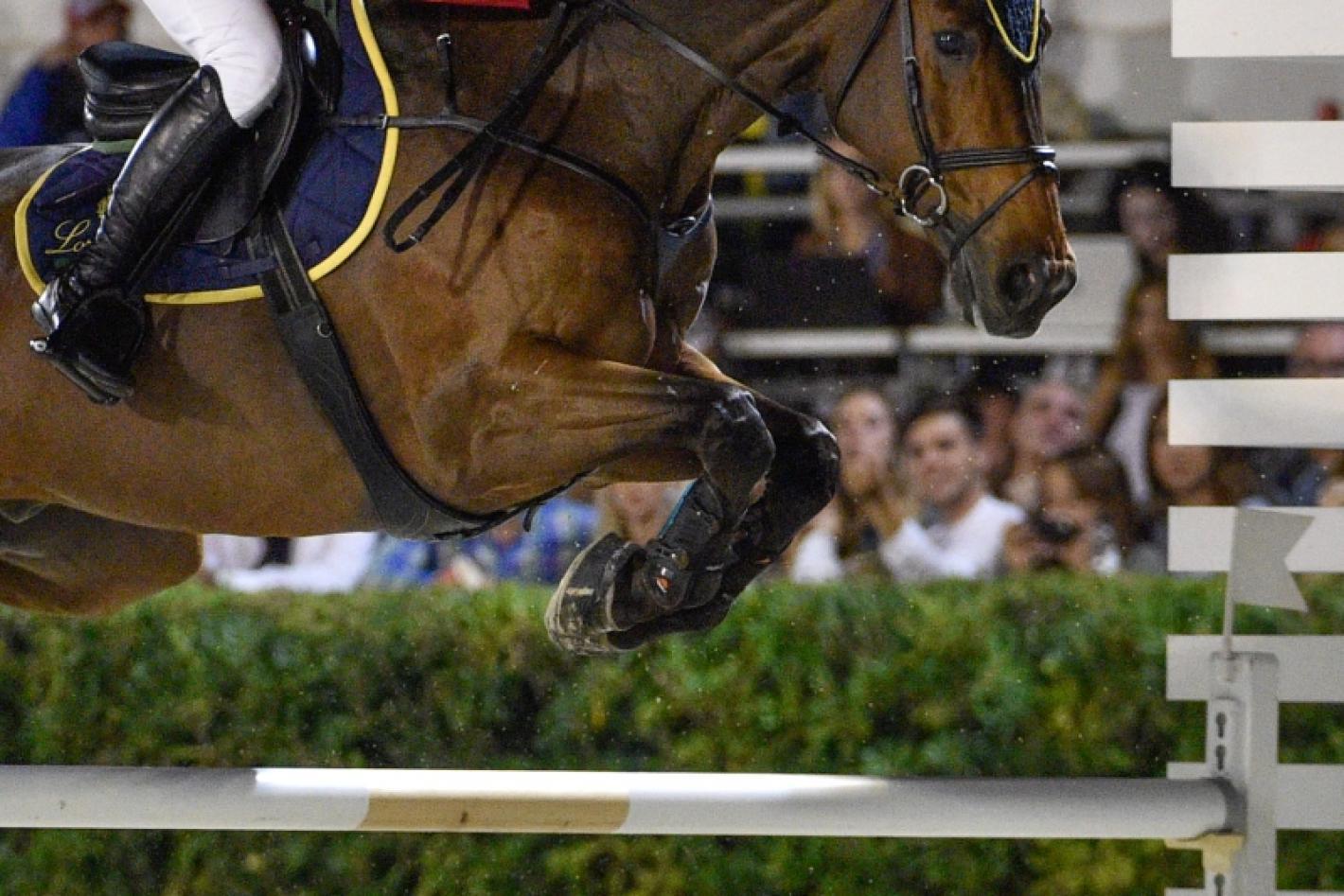 Fise Calendario Salto Ostacoli.Federazione Italiana Sport Equestri Comitato Regionale