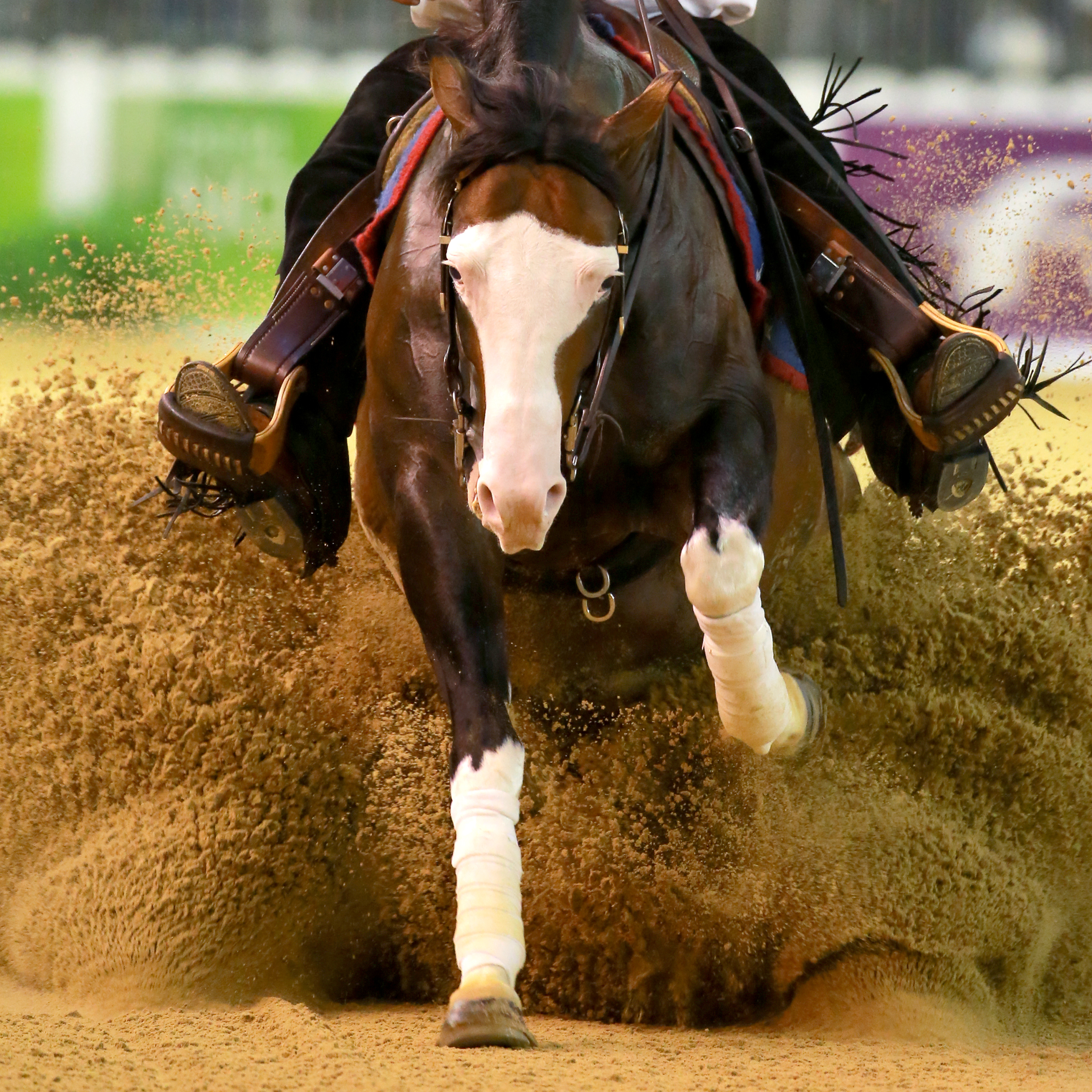 incontri equestri Australia Stiamo spostando dating troppo veloce